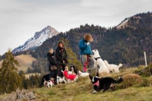 Oh Dog, promenade pour chien en pleine nature. Pet sitter diplômé. Blonay, Vevey, Montreux.