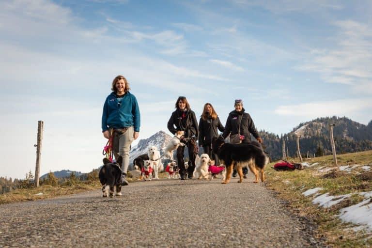 Oh Dog, promenade de chien, transport de vos animaux, garde à domicile, pension. Un service sur mesure