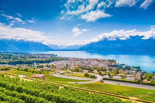 oh dog vevey riviera vaud suisse